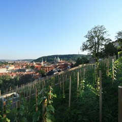 The western part of the Saint Wenceslas Vineyard is adjacent to Prague Castle in the vicinity of the Black Tower, from where the vineyard and the Villa Richter grounds can be entered.