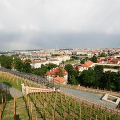 The recently restored vineyard, on the site of the oldest vineyard in Bohemia (legend has it, established by Prince Wenceslas), is located above the Old Castle Stairs.