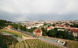 St.Wenceslas Vineyard